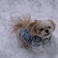 Wooは雪遊び大好き!!